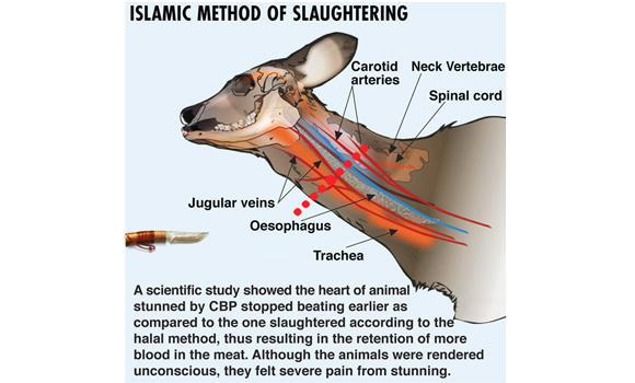 islamic slaughter_web