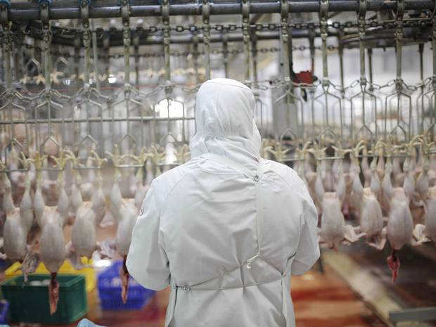 UK: Does Halal meat mean 'animals are dying in pain'?