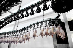 UK: Industry in disagreement over lack of animal slaughter policy